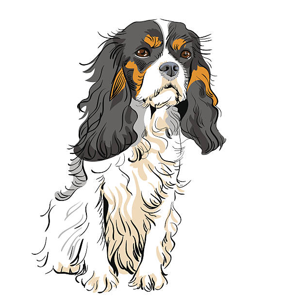 vektor hund cavalier king charles spaniel - hundehaarbögen stock-grafiken, -clipart, -cartoons und -symbole