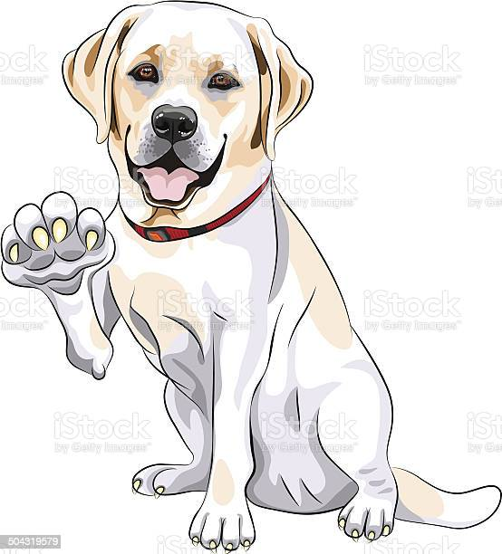 Vector dog labrador retriever smiles and gives paw vector id504319579?b=1&k=6&m=504319579&s=612x612&h=8kmaldiltl q9ahol skvfcxmvcx9g9la9qxwheyktg=