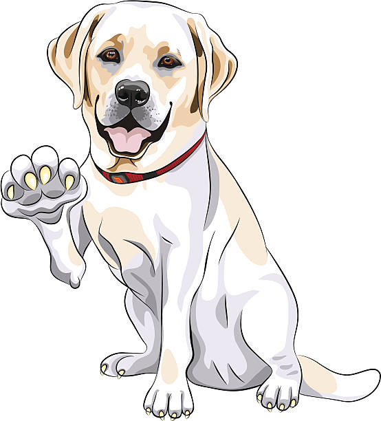 Best Labrador Retriever Illustrations, Royalty-Free Vector ...