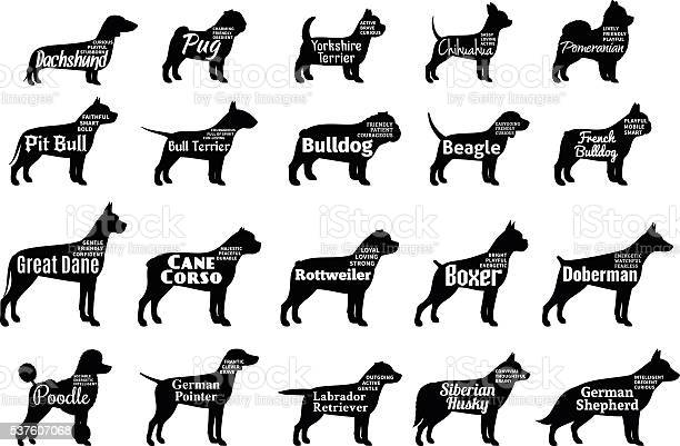 Vector dog silhouettes collection isolated on white vector id537607068?b=1&k=6&m=537607068&s=612x612&h=t6bxexo8dkxp faw4gh3 wqmxujrnzvjec2nznafob0=