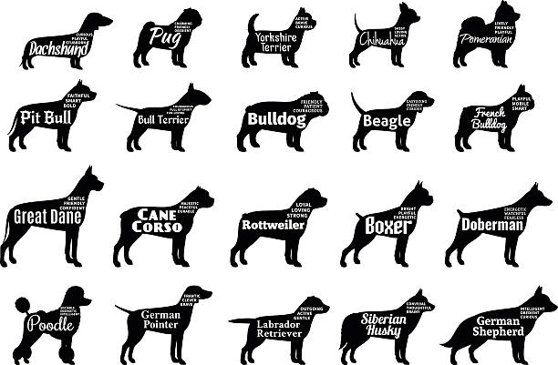 illustrations, cliparts, dessins animés et icônes de vector collection de silhouettes de chien seul sur blanc - dog