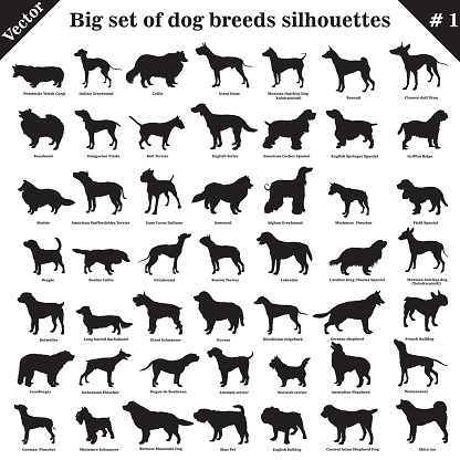 Vector dogs silhouettes 1