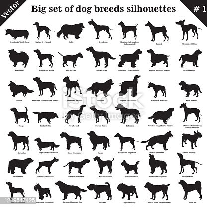 Big set of 49 different dogs, hounds, working, shepherd, terrier, companion, hunting. Vector set of different  dogs standing in profile. Isolated dogs breed silhouettes set in black color on white background.