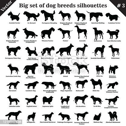 Big set of 49 different dogs, hounds, working, shepherd, terrier, companion, hunting. Vector set of different  dogs standing in profile. Isolated dogs breed silhouettes set in black color on white background. Part 3