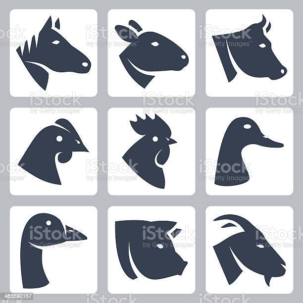 Vector domesticated animals icons set vector id483590157?b=1&k=6&m=483590157&s=612x612&h=vqp7fwzgatuq6gi14s5ooojfo  buurzfsi8huyyqws=