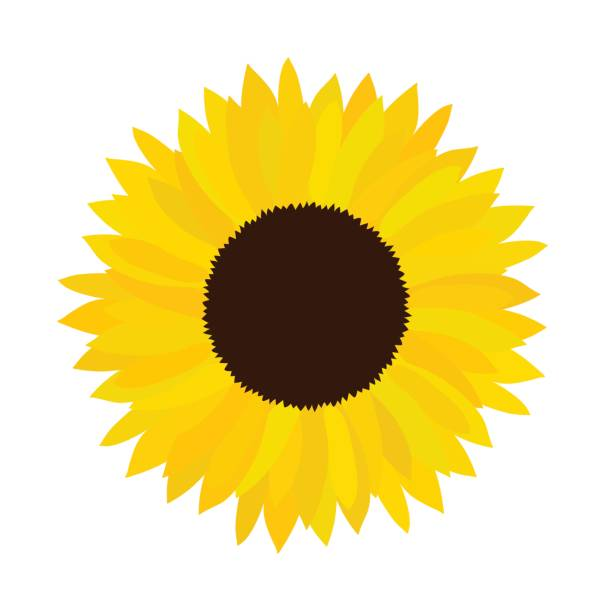 Royalty Free Single Sunflower Clip Art, Vector Images ...