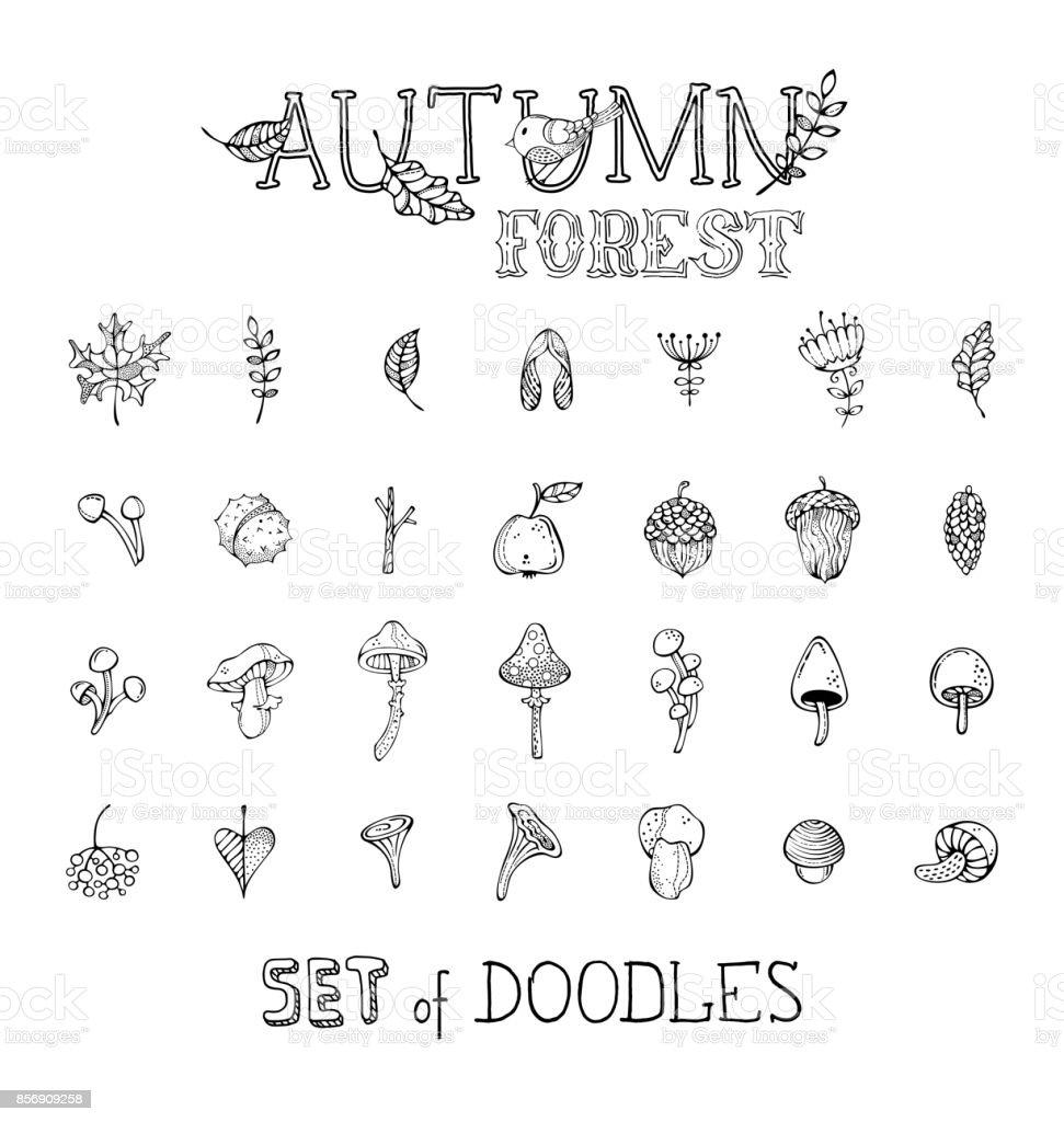 Ilustración de Vector Doodles Conjunto De Otoño Plantas Forestales Y ...