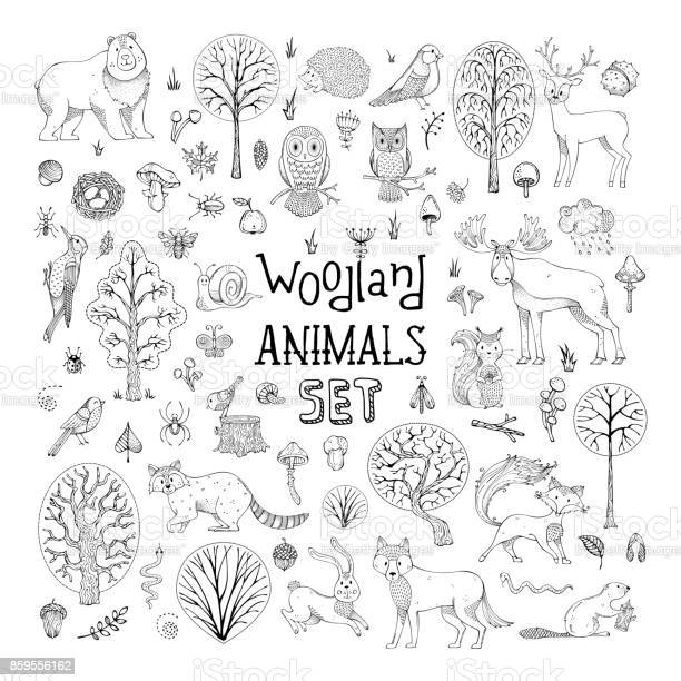 Vector doodles woodland animals set vector id859556162?b=1&k=6&m=859556162&s=612x612&h=1tyfc6aq3udztfwcb7iotlaygc9u6hz 5xvxifv8kqi=