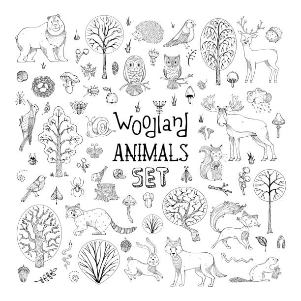 Vector doodles woodland animals set. Hand-drawn collection for children colouring books, invitations, cards and posters. Deer, fox, hedgehog, owl, hare, raccoon, snail, squirrel, bee, mushroom, tree. woodland stock illustrations