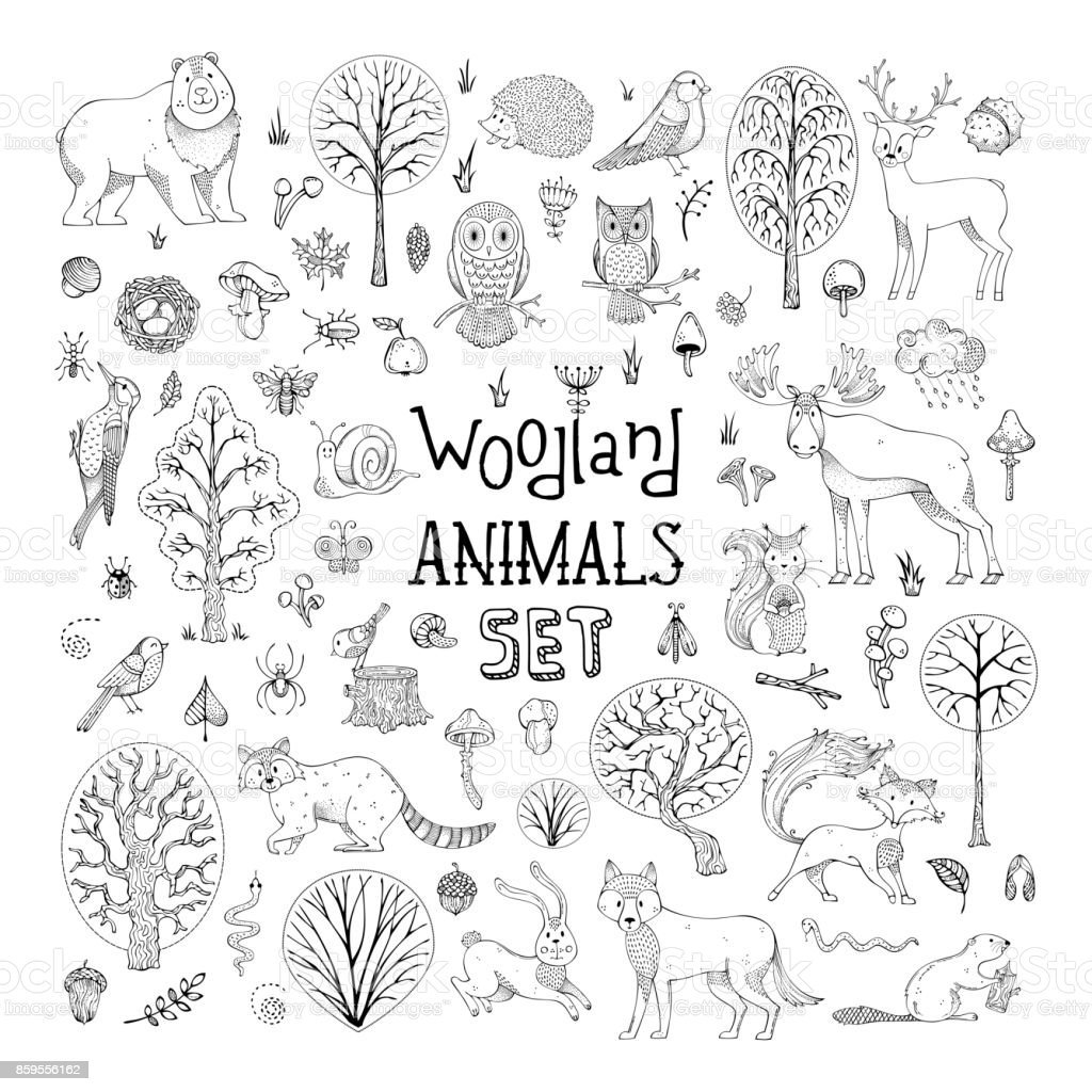 Vector doodles woodland animals set. vector art illustration