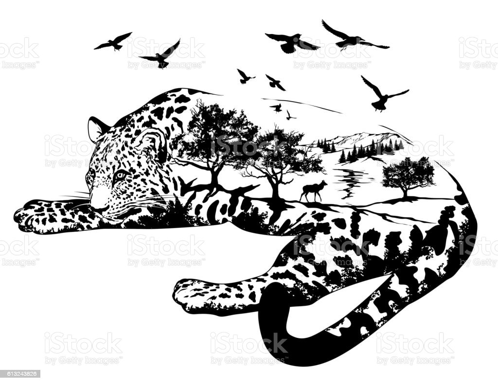 Line Drawing Jaguar : Vector double exposure hand drawn jaguar stock art more