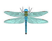 Dragonfly icon in flat style isolated on white background. Design element for print templates, websites, web and mobile phone apps. Vector illustration.