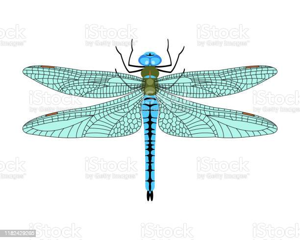 Vector dragonfly icon in flat style isolated on white background vector id1182429265?b=1&k=6&m=1182429265&s=612x612&h=ulajkva3xsxuiag35nif1lj1hkqgor 4jr usco9rc8=