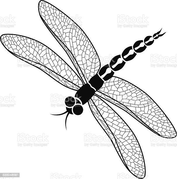 Vector dragonfly in black and white vector id535048581?b=1&k=6&m=535048581&s=612x612&h=6fzknk7tywng31nnn9rxnbvofrvwi0p03 ja36gn8iu=
