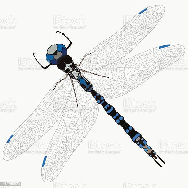 Vector dragonfly isolate vector id482785920?b=1&k=6&m=482785920&s=612x612&h=hxfdgh52iuy99zrmn ktuxyfvx1ojh8oqonrefg g4e=