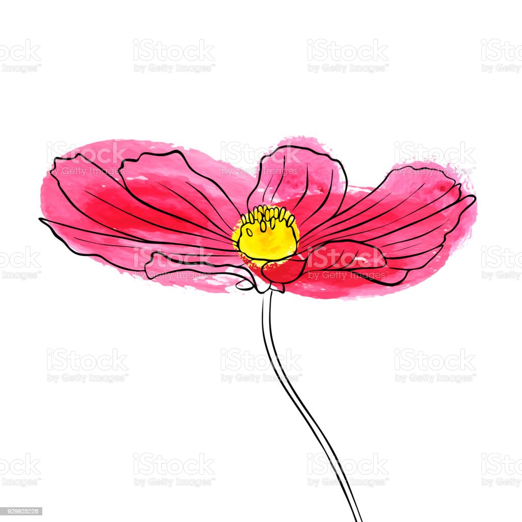 Vector Drawing Flower Of Daisy Stock Vector Art More Images Of Art