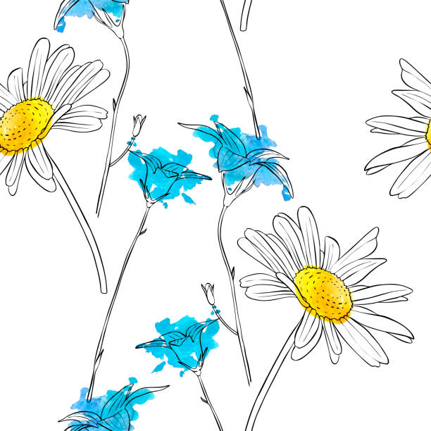 vector drawing flower of daisy vector drawing daisy flower, floral element, hand drawn botanical illustration daisy stock illustrations