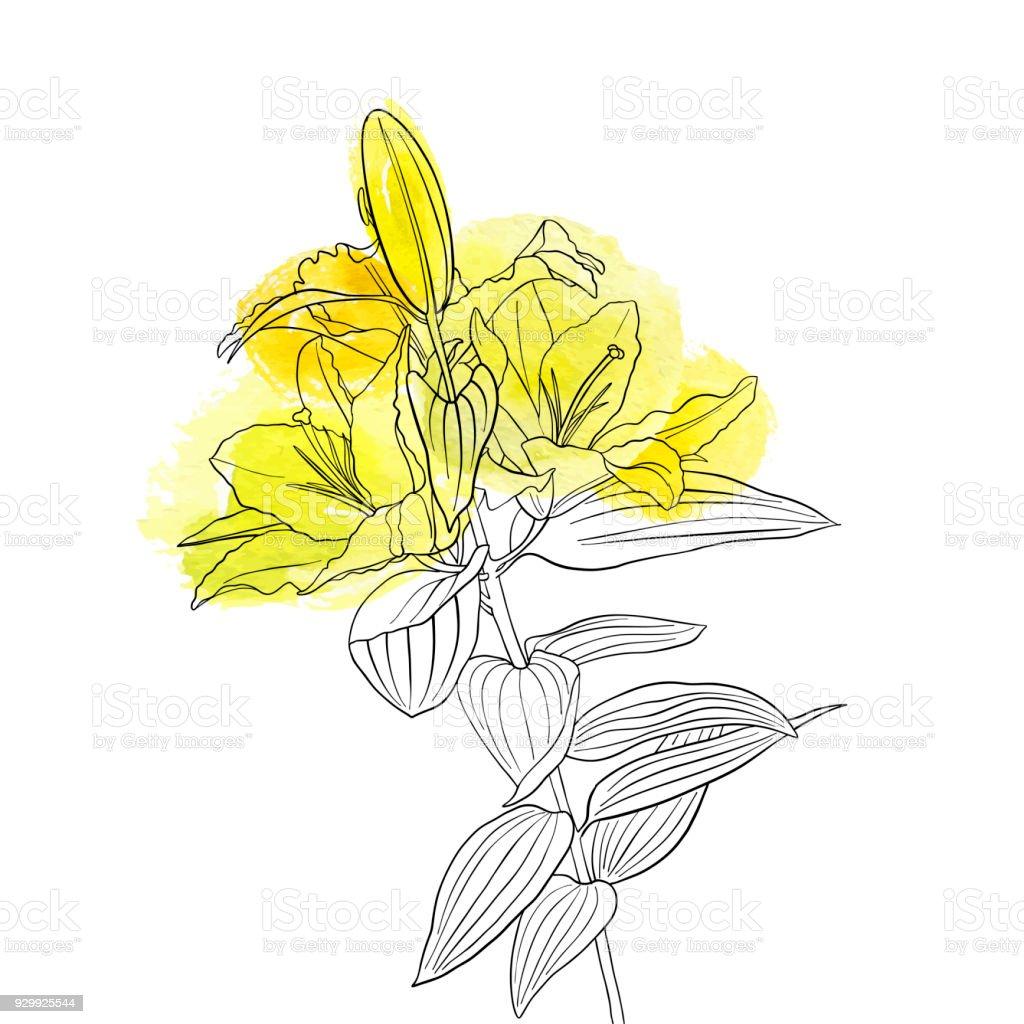 Vector drawing flower of lily stock vector art more images of art vector drawing flower of lily royalty free vector drawing flower of lily stock vector art izmirmasajfo
