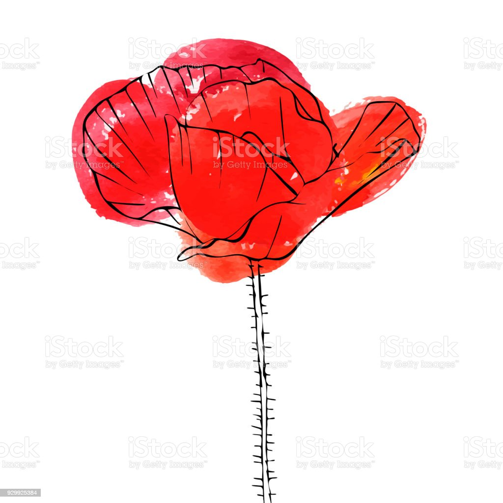 Vector Drawing Flower Of Poppy Stock Vector Art More Images Of Art