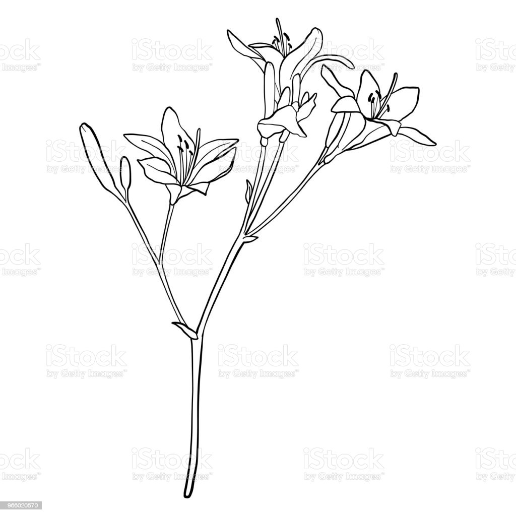 vector drawing flower - Royalty-free Beauty stock vector