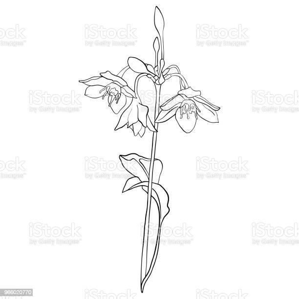 Vektor Zeichnung Blume Stock Vektor Art und mehr Bilder von Altertümlich