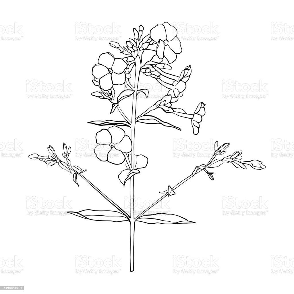 vektor ritning blomma - Royaltyfri Blomkorg - Blomdel vektorgrafik