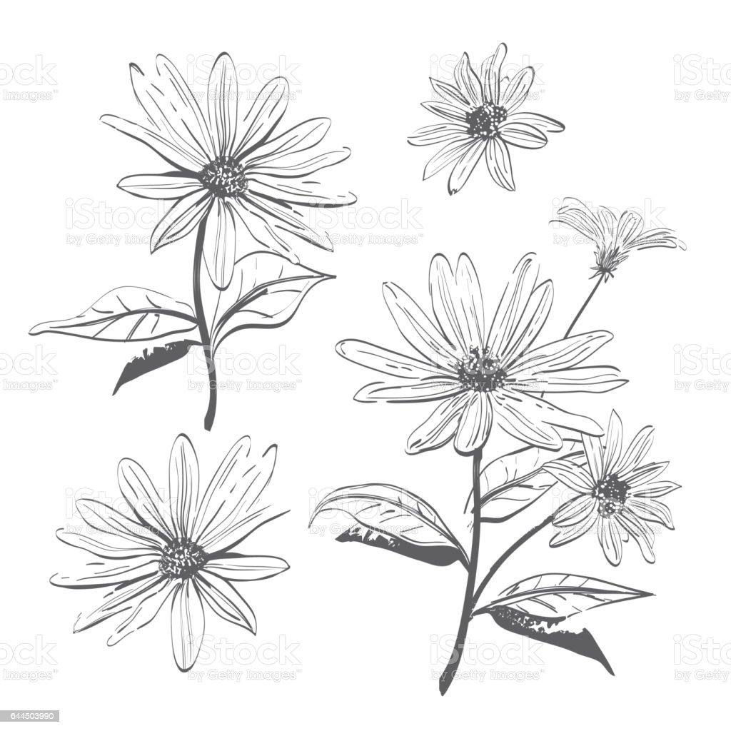 Vektör çizim çizilmiş Chamomiles Papatya çiçekler Suluboya
