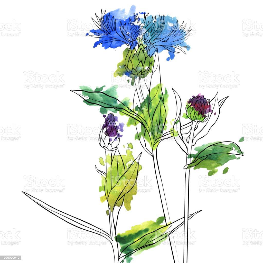 Fleurs De Bleuet De Dessin Vectoriel Cliparts Vectoriels Et Plus D