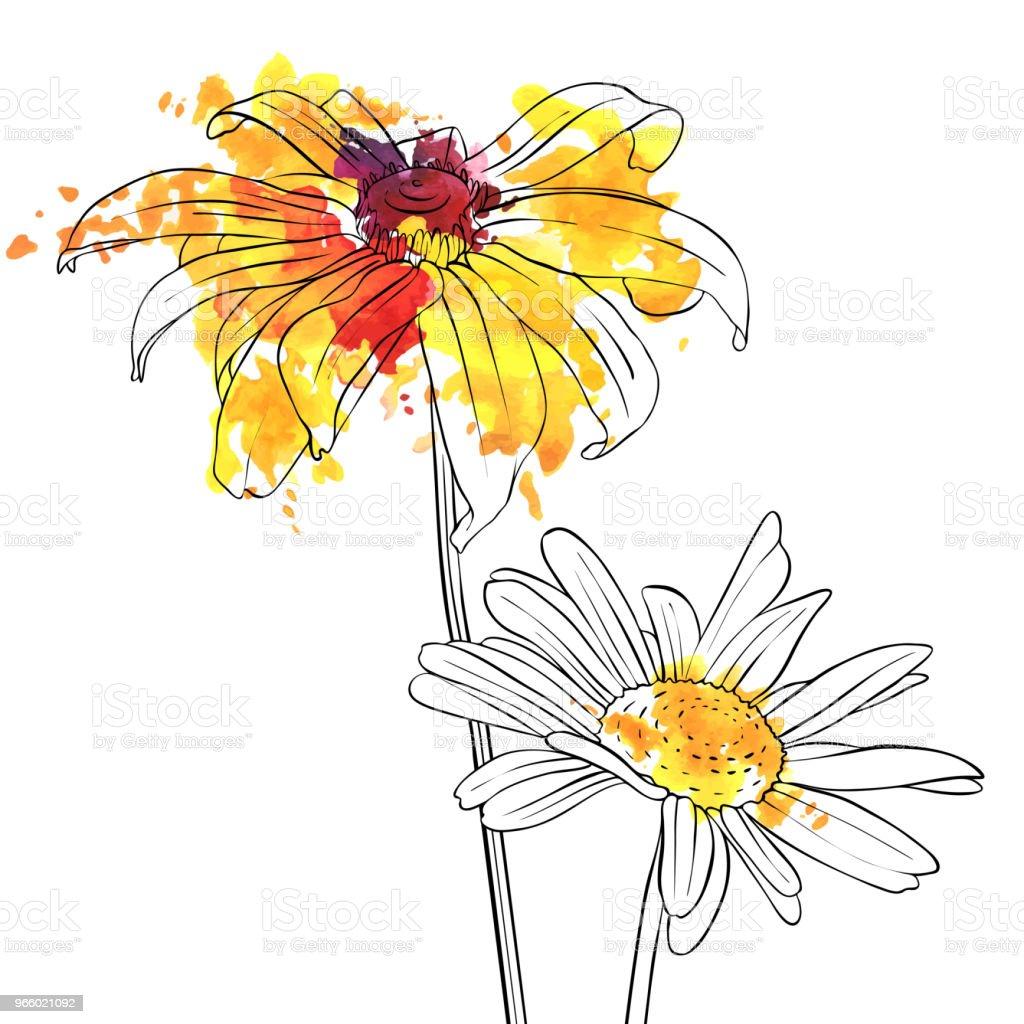 Vektor-Zeichenprogramm Blumen von daisy - Lizenzfrei Aquarell Vektorgrafik