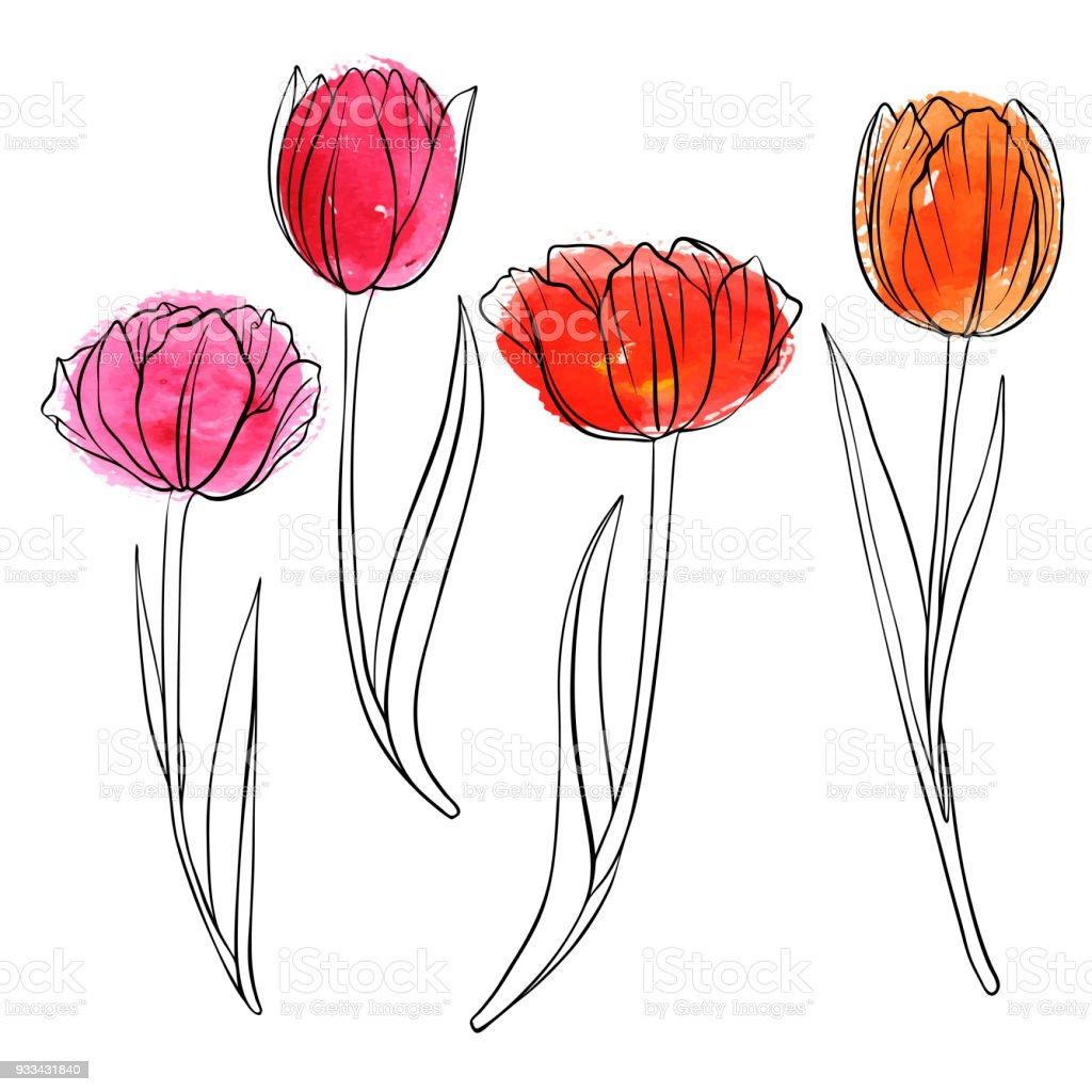 Fleurs De Tulipe De Dessin Vectoriel Vecteurs Libres De Droits Et Plus D Images Vectorielles De Aquarelle Istock