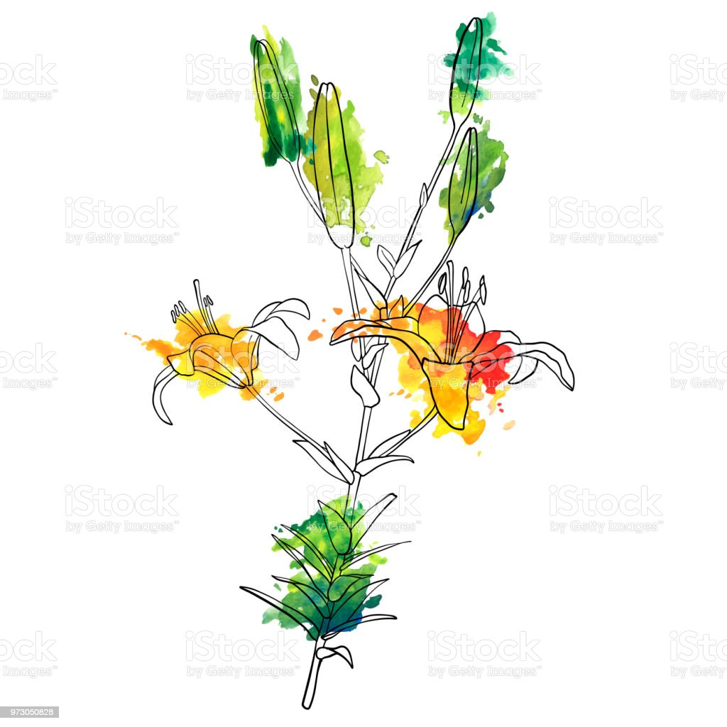 Vector Drawing Lily Flower Stock Vector Art More Images Of Art