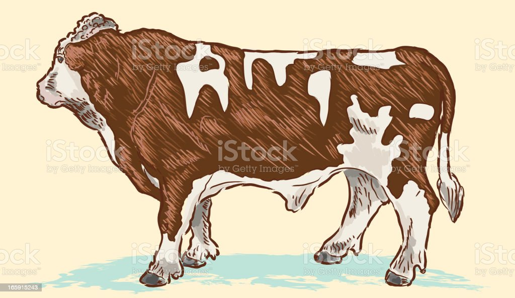 Vector Drawing Of A Beef Cow Or Steer Royalty Free