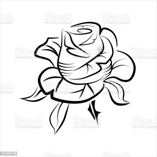 Vector drawing of a rose tattoo logo vector id974885168?b=1&k=6&m=974885168&s=612x612&h=508yev84lfy58u4yhhnvabut cgrzlibn4zyyyxekg4=