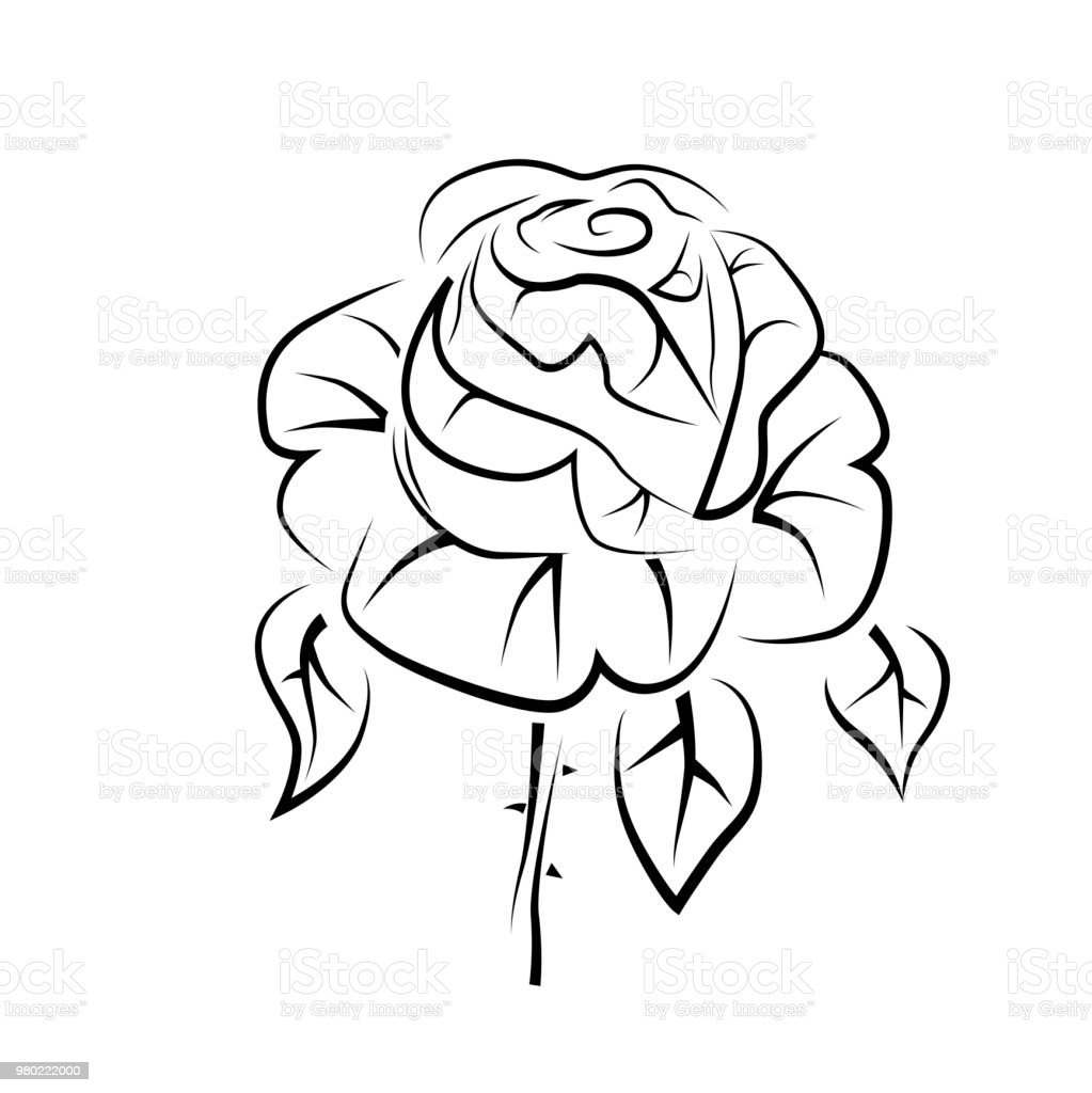 Vector Drawing Of A Rose Tattoo Logo Stock Illustration Download Image Now