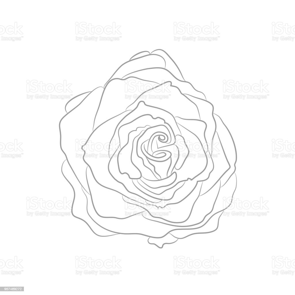 Vector Drawing Of Contour Rose For Coloring Book Stock Vector Art ...