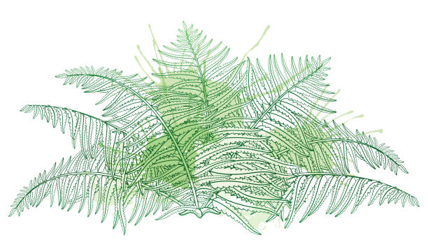 vector drawing of outline fossil forest plant fern with fronds in pastel green colored isolated on white background. - fossilized leaves stock illustrations