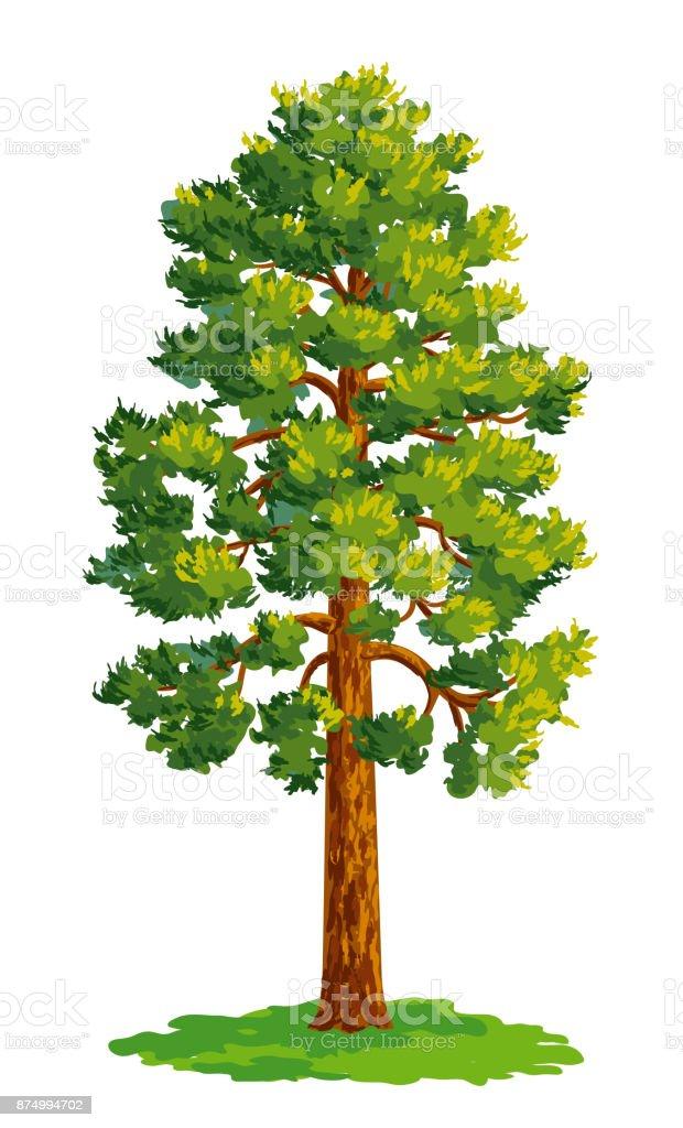 çam Ağacı çizim Vektör Stok Vektör Sanatı Ağaçnin Daha Fazla