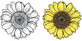 Classic style illustration of sunflower on white background