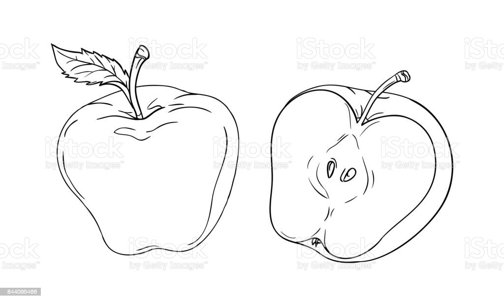 Vector Drawing Or Coloring Sheet With Apple Cut In Half Isolated On