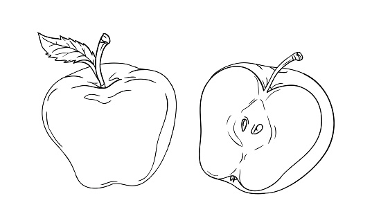 Vector Drawing Or Coloring Sheet With Apple Cut In Half Isolated