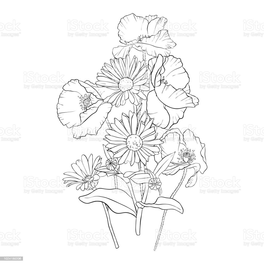 Vector drawing poppy flowers stock vector art more images of art vector drawing poppy flowers royalty free vector drawing poppy flowers stock vector art amp mightylinksfo