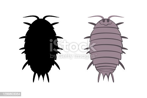 Vector drawing wood lice isolated on a white background.