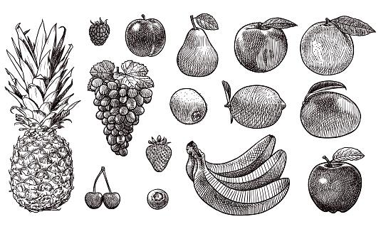 Vector drawings of various fruits