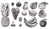 Old style illustration of fruits. There is pineapple, raspberry, plum, pear, peach, orange, grapes, kiwi, lemon, mango, strawberry, bananas, cherries, bilberry, and apple.