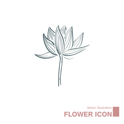 Vector drawn flowers.
