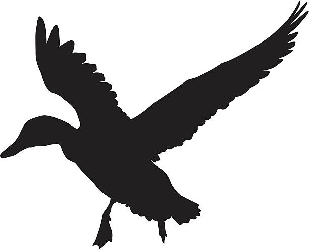 Vector duck Flying duck silhouette.  Vector EPS 8 water bird stock illustrations
