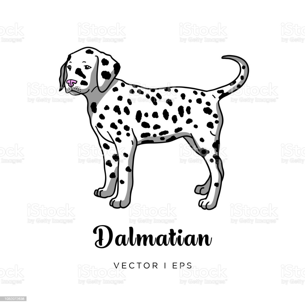 Vector Editable Image Of A Cute Dalmatian Puppy Dog Isolated On A White Background Stock Illustration Download Image Now Istock
