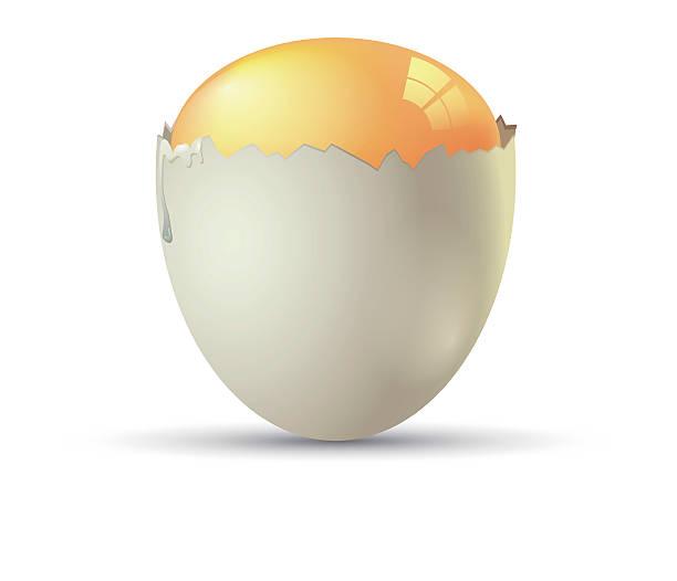 stockillustraties, clipart, cartoons en iconen met vector eggs - fresh start yellow