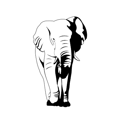vector elephant. front view. illustration of realistic mammal. simple design element for t-shirt, banner, poster, invitation, flyer, placard. animal print. black and white image