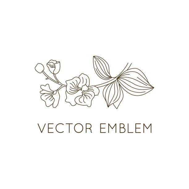Vector emblem design template - floral illustration in simple minimal linear style Vector emblem design template - floral illustration in simple minimal linear style - emblem and icon for natural cosmetics packaging orchid stock illustrations